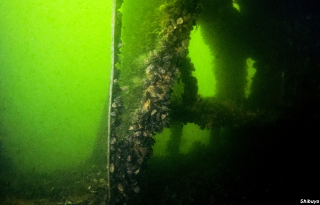grozny-wreck-diving