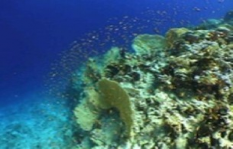 reef-ABU-RAMADA-NORTH-Egypt3