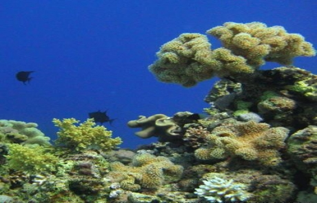 reef-MIDDLE-GARDEN-Egypt2
