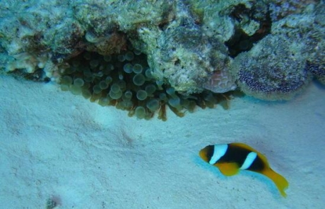 reef-MIDDLE-GARDEN-Egypt3