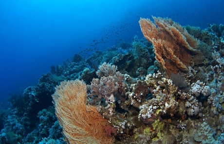 reef-PANORAMA-REEF-Egypt1