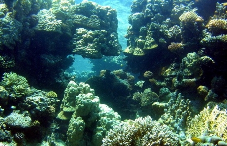 reef-PANORAMA-REEF-Egypt6