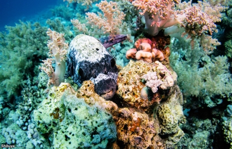panorama-reef-egypt-diving-spot
