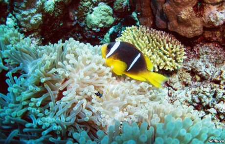 panorama-reef-egypt-scuba-diving-site