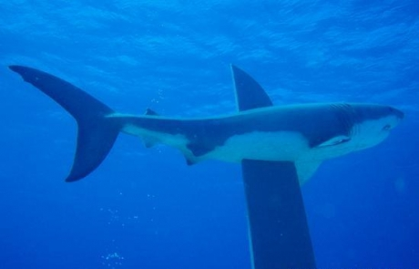 reef-HEPCA-SHARK-MONUMENT-Egypt1