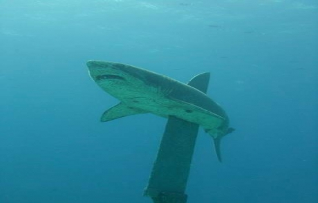 reef-HEPCA-SHARK-MONUMENT-Egypt2