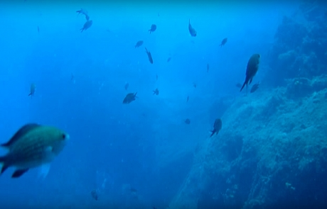reef-BIG-REEF-Turkey1